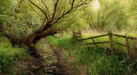 Call for Artists: WetlandLIFE