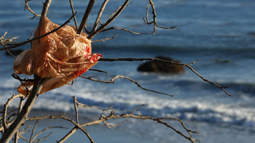 plastic bag caught in branches