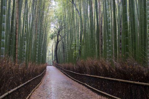 068 - Arashiyama Bambouseraie