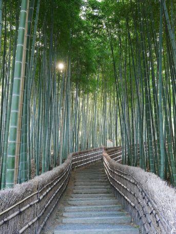 080 - Kyoto bambouseraie