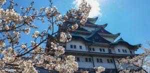 Sakura Nagoya Castle