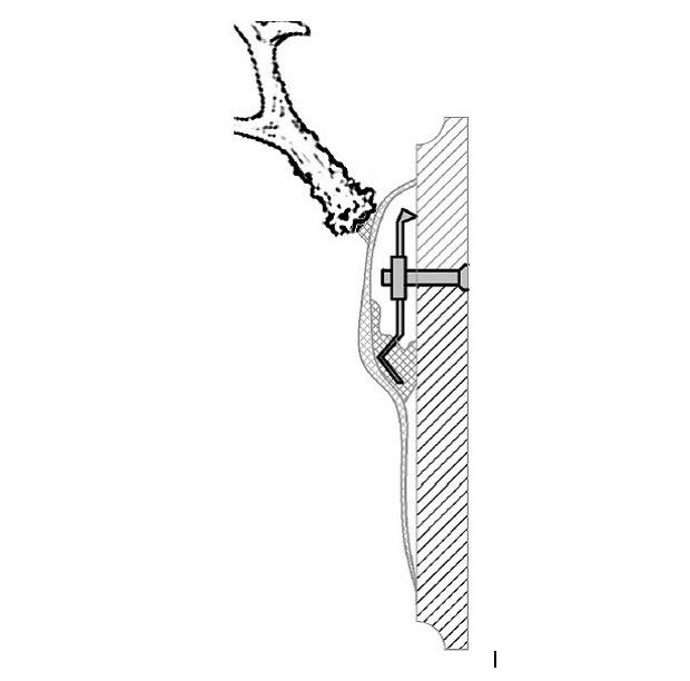 SUTTER® Gehörnklammer für den Rothirsch / Damhirsch