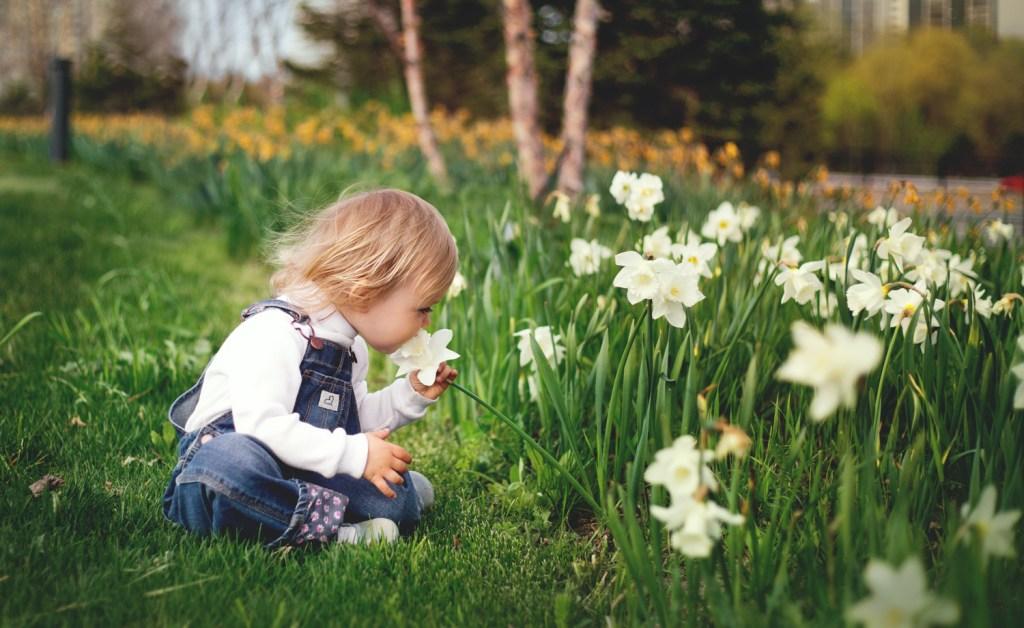 easter sutterton daffodils