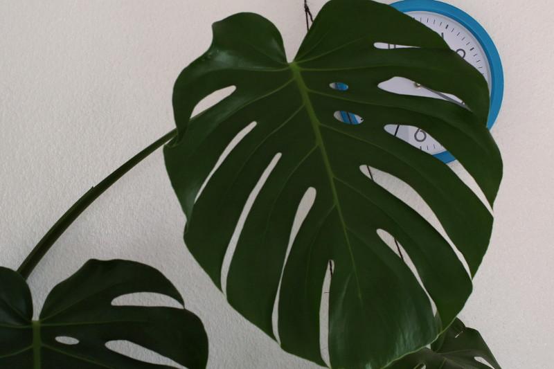 Alltag in 3er-WG in Südstadt: Die Pflanzen meines Mitbewohners