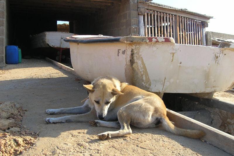 Ibiza: Hund mit Fischerboot