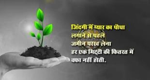 Zindagi Mein Pyar Ka Paudha