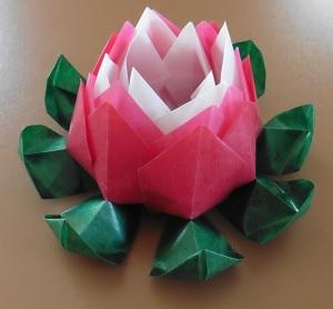 Lotus bloem blad laag om geknikt