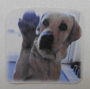 Stickers maken de hond