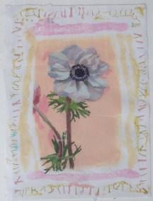 Single anemone