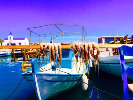 Paros Greece fishermen village octopus catch of the day