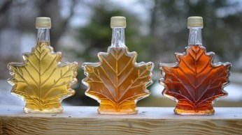 maple-syrup-mcgill
