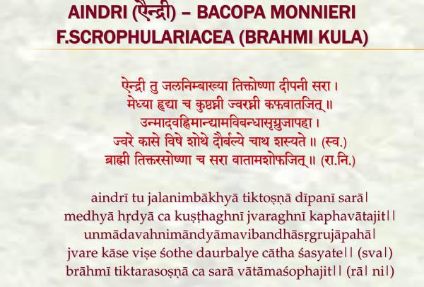 Aindri - Learn About the Brain-Nourishing Ability of Bacopa Monnieri (Jal Brahmi)