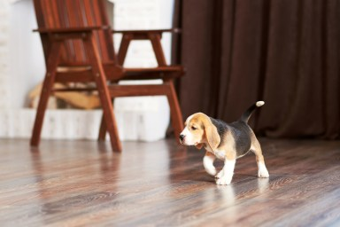 puppy-claws-pets-on-hardwood-floor-svb-kc