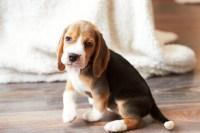 Best Hardwood Floors for Dogs | SVB Wood Floors