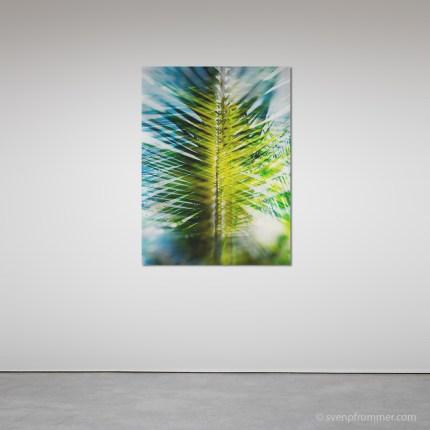 evergreen_rooms2