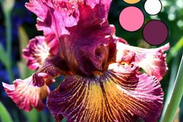 Iris Flower Delica Bead Color Palettes - Palette #2