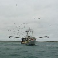 Fishing boat en route