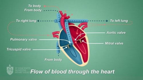 small resolution of what is heart valve disease