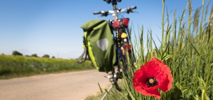 Cycling Poppy Leisure Bike  - Didgeman / Pixabay