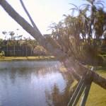 8052 – 12/26/05 bull iguana by the lake
