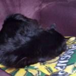 sleepy kitties – Pye and Newt