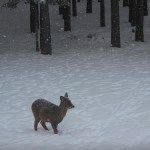 Snow and Deer!