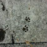 Snowcat redux