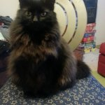 Pyewacket calls a HR meeting with Allison and me