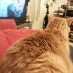 Newton watches Sherlock