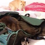 Newton and Pye trying to stowaway
