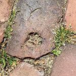 Kitty footprint in the brick. https://t.co/Hd3fU0rm3b https://t.co/jyP8dNdz2b