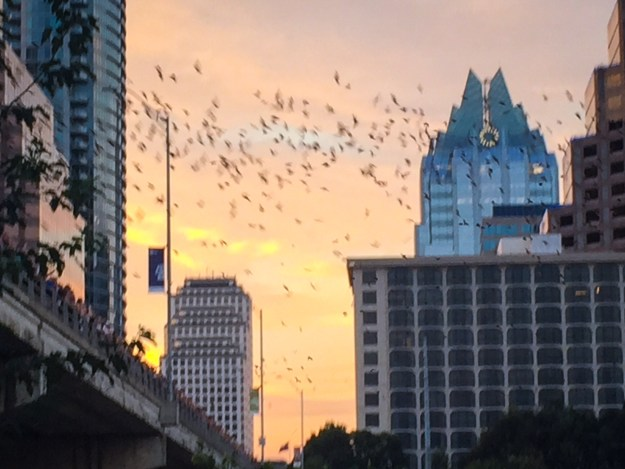 Start of the bats coming out to eat.