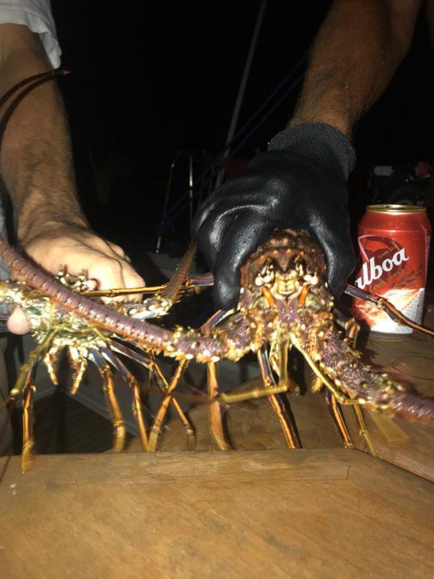 Dinner - lobsters!