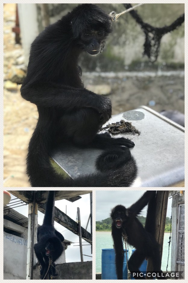 Cute monkey, but his living conditions are so sad.