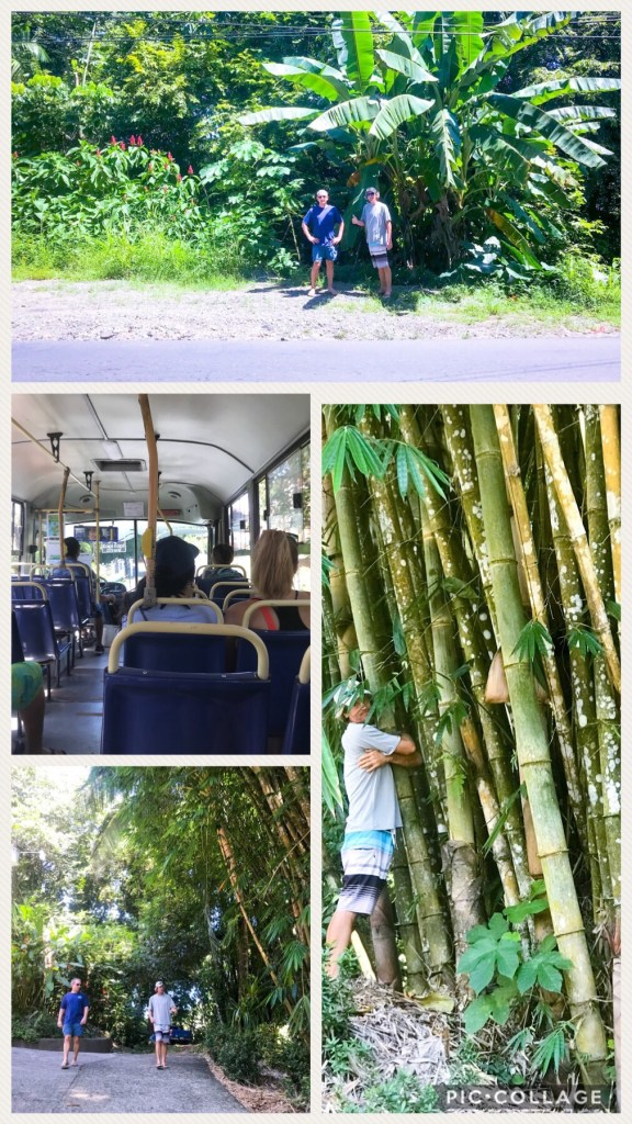 Bamboo Love and Bus Ride