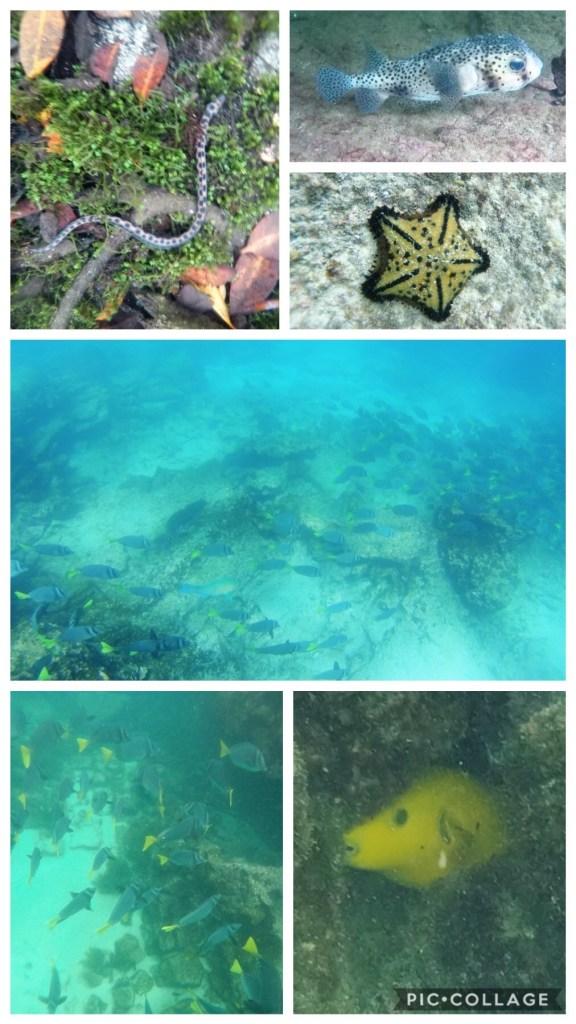 Cool Treasures of the Sea