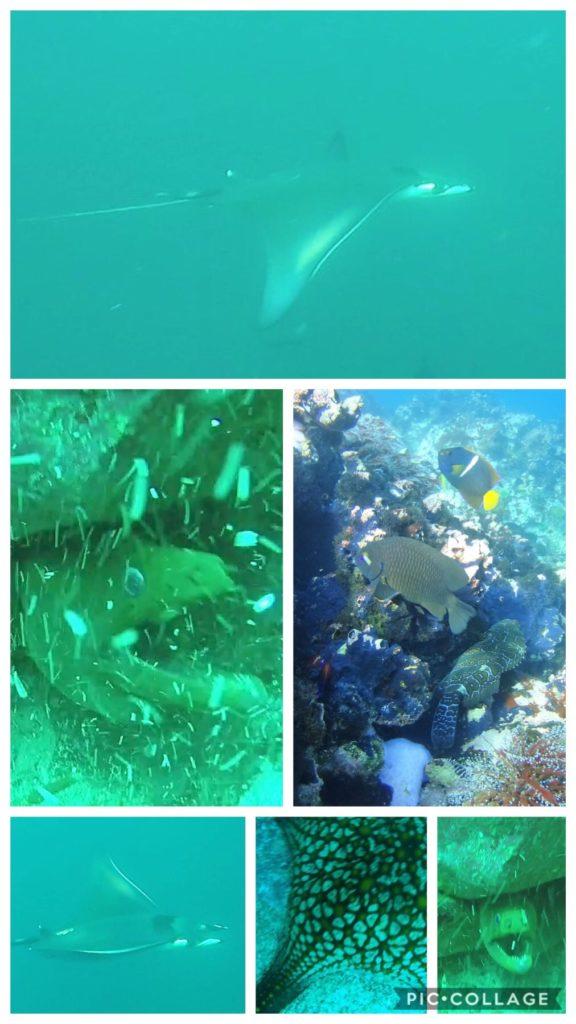 Kicker Rock Underwater Creatures