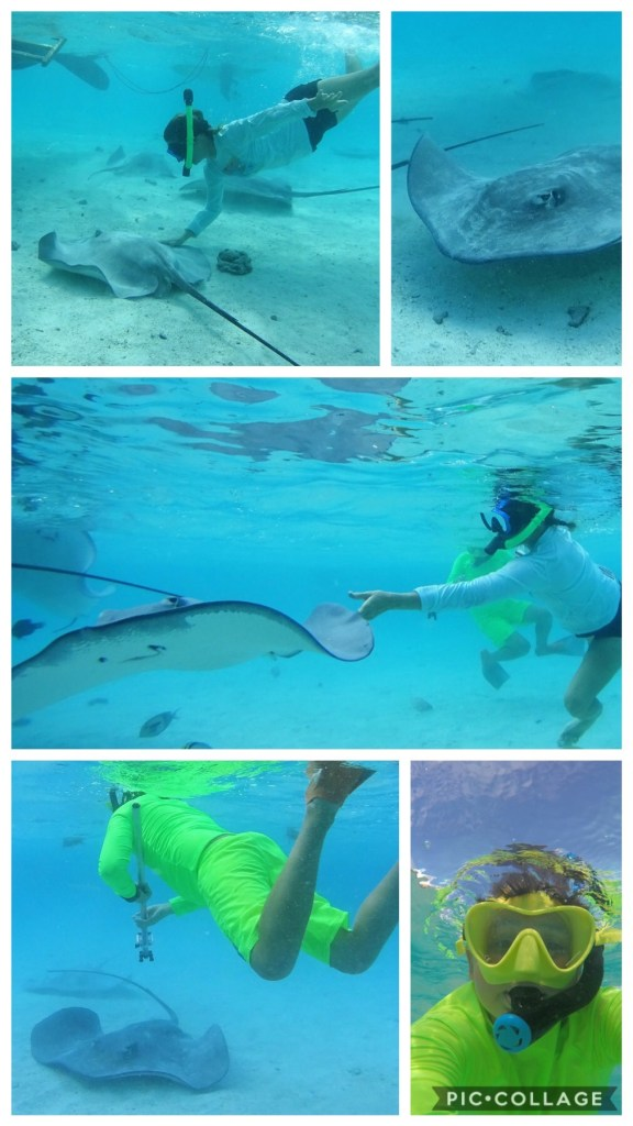 Touching and Playing with Sting Rays