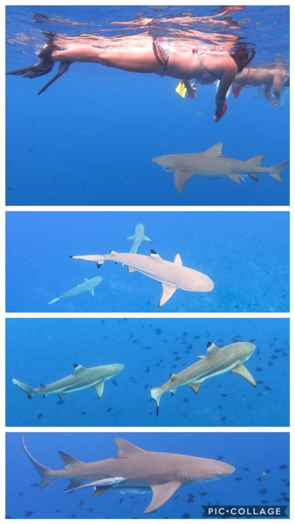 Me swimming with lemon and black tip sharks