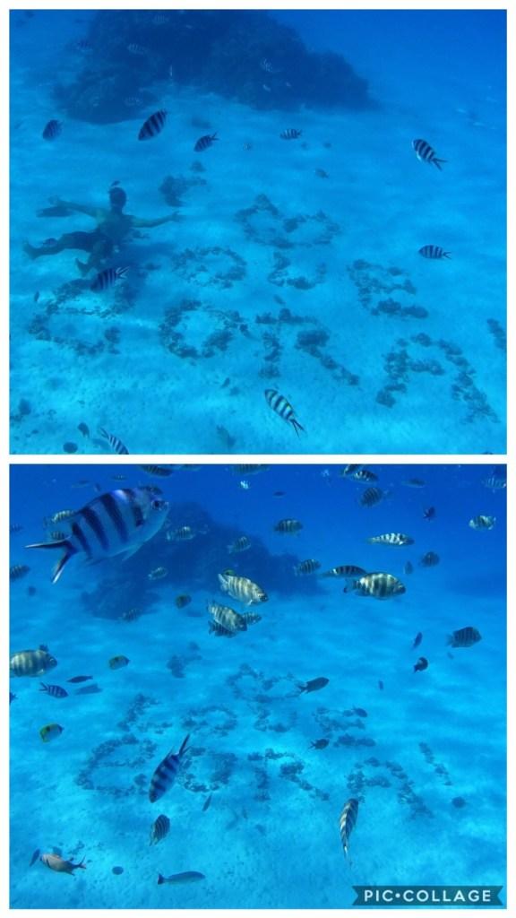 Aquarium at Bora Bora