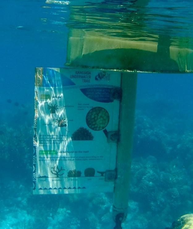 Station 1 Underwater Garden