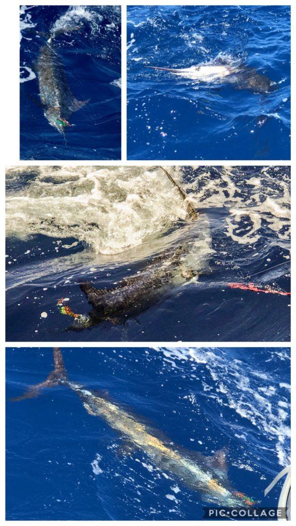 70 kilo Marlin
