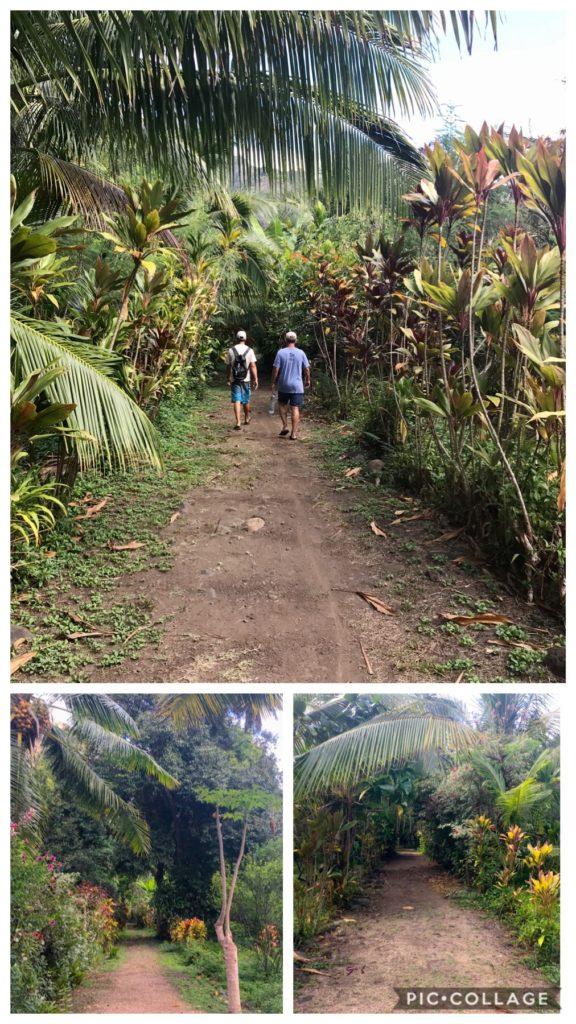 Hike to waterfall in Daniel;s Bay