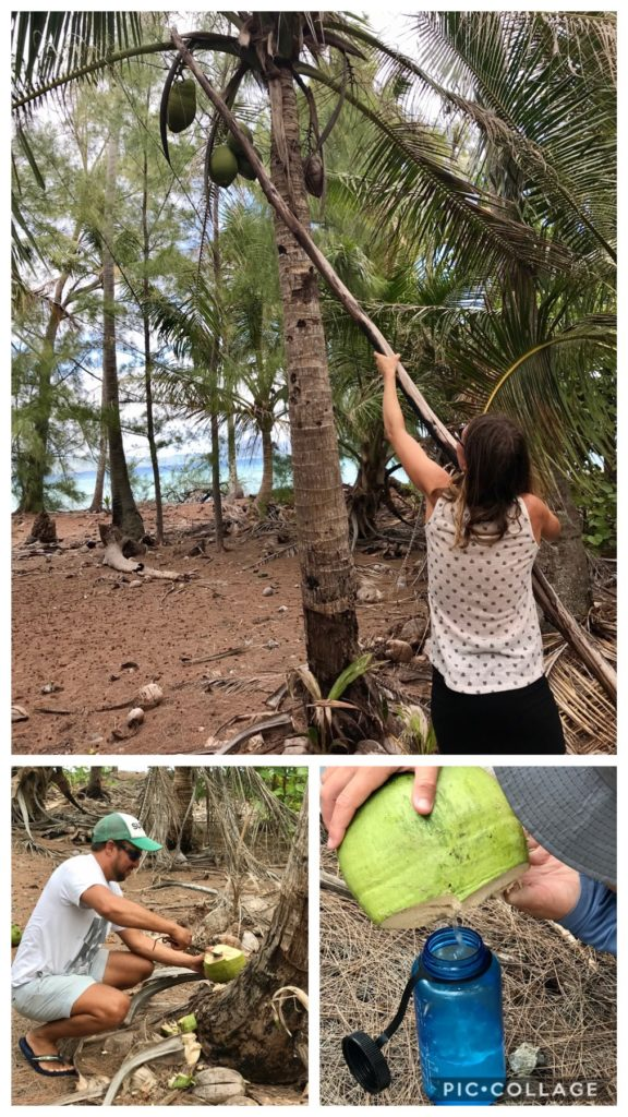 Coconut Hunting
