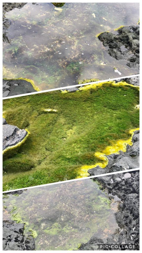 Pools of Water on the Ridge