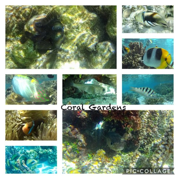 Coral Gardens Fish