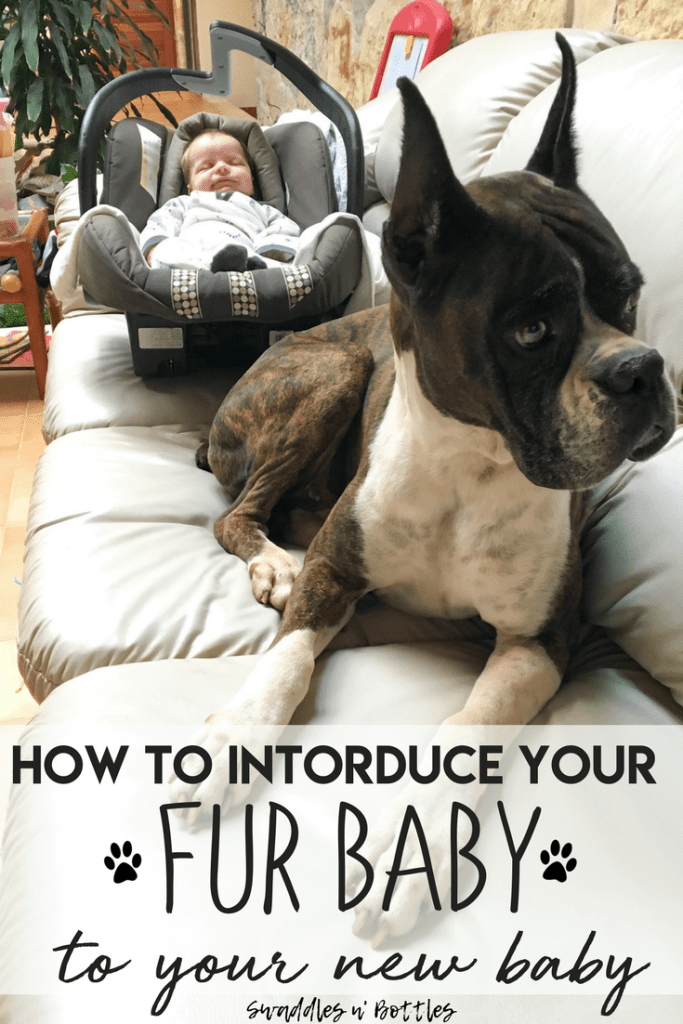 Tips for Introducing Your Fur Baby to Your New Baby