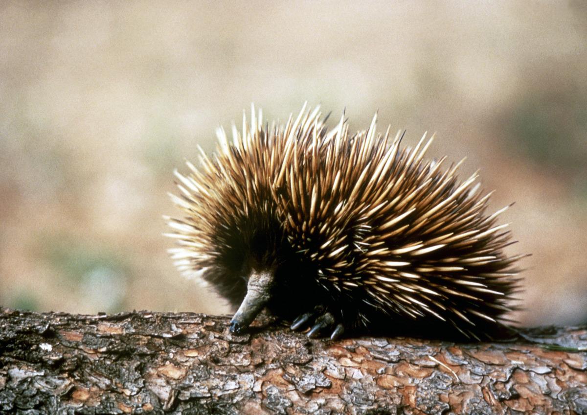 Australia Is A Unique Wonderland Of Animals Swain Destinations Travel Blog