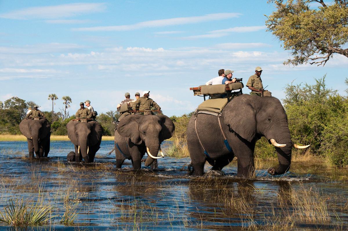 Victoria Falls Wallpaper World Elephant Day Swain Destinations Travel Blog