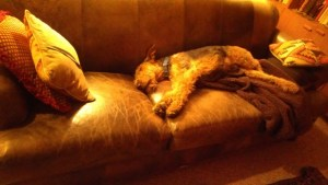 lola-couch